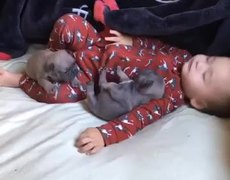 #CUTE - Rolling in the Bed with Puppies