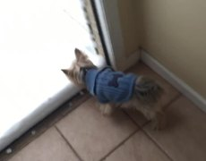 Dog see the Snow for First Time