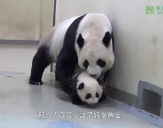 #CUTE - Panda mother sends her baby to sleep with a tender gesture