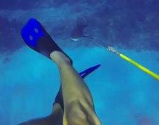 Insane shark attack