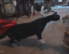 Funny Cats Compilation 2014 Part 1