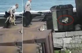 #VIRAL Man throwing a poor dog to polar bear