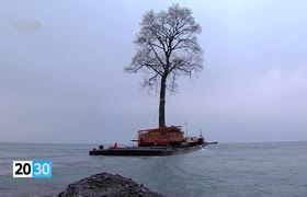 Millionaire moves tree 135 years by the Black Sea