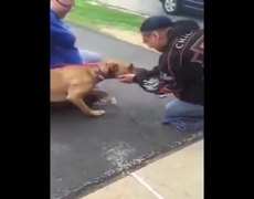 Emotional Encounter Between a Homeless Man and His Re-Homed Dog