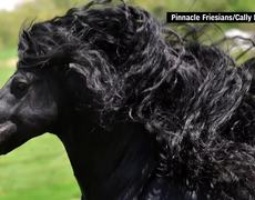 #Viral - Is this the world's most handsome horse?