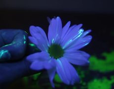 DIY Glow in the Dark Flowers