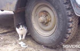 #VIRAL - Mouse ninja vs Cat