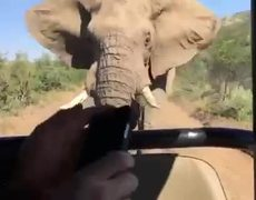 #VIDEO - Arnold Schwarzenegger chased by an elephant in South Africa