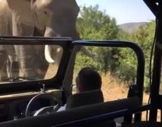 #OMG - Arnold Schwarzenegger films safari elephant chasing after his car