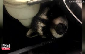 OMG - Auto Body Tech Discovers Four Baby Raccoons Hiding In Car Engine