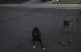 Dogs Charge Police Officer