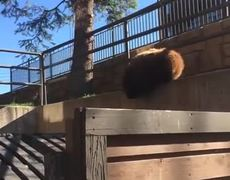 Men Yelling at Bear