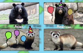 Which Bear Is Best?