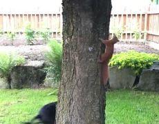 #VIRAL - Perro y ardilla juegan a atraparse alrededor de un árbol
