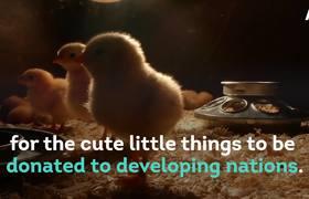 Billionaire Bill Gates Donates 100,000 Chicks