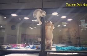 #VIRAL - Kitten Jumps In Puppy Cage and are the best friends
