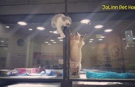 #VIRAL - Gatito salta a la caja de un perrito y se convierten en los mejores amirgos