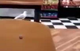 #VIRAL - Gaviota robando dentro de una tienda