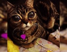 #Top10 - Cats do not believe that exists
