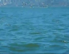 #VIDEO - Humpbacks Feeding Against San Francisco Skyline