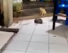 #VIRAL - Cat watching mouse fight!