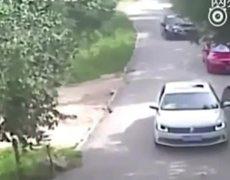 Tiger Attacks and Kills Woman At Beijing