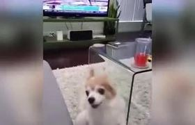 Dog hates been flipped Off