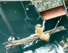 #VIRAL - Rescue leopard fell into a well in India