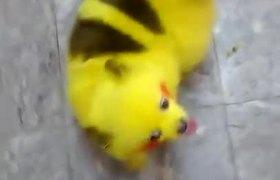 #VIRAL - #PokémonGo fan paints dog looks like pikachu