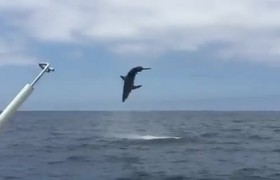 ¿Shark or dolphin? look what he did this marine animal to tourists in San Diego