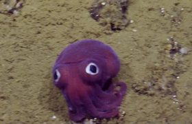 #VIRAL - Looks like a toy, but it is a rare marine species was found in California
