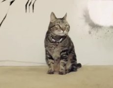 Wolverine Cat X Men Origins Viral Video