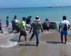 Raw - Whale shark rescued from Peruvian beach