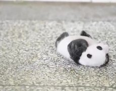 Panda Cub Trying to Turn Over a Viral Hit