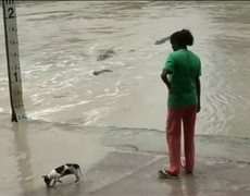 VIRAL - Women Scares Away A Crocodile With Her Flip-Flop