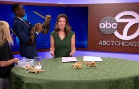 Reportero se asusta de serpiente durante programa