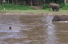 Elefante se lanza a salvar a su cuidador de
