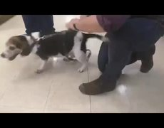 Dog Sounds Like a Tie Fighter From #StarWars