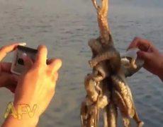 Octopus Kisses Back