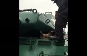 Rescuing A Raccoon Stuck in an Army Tank