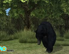 Pedals the bear shot dead: Bear famous for walking on two legs killed during hunt