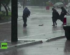 Una cría de cocodrilo 'se pasea' por una carretera en México