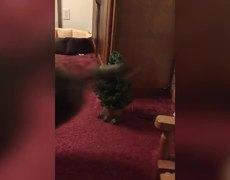 10 Christmas Tree Fails - Cats
