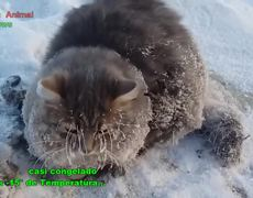 #VIRAL - Frozen kitten in Russia