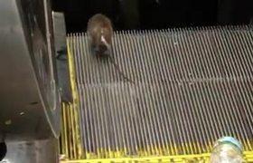 #VIRAL - Rat scandal in Penn Station escalator