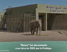 Murio Benny, el elefante del Parque Ecológico de Ecatepec