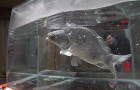 Fish Survives Liquid Nitrogen Experiment
