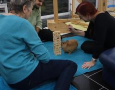 #VIRAL - Bunny Playing Jenga
