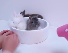 Peppa Pig adopts a bunny and learns to take care of it