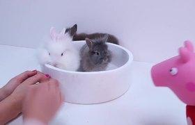 Peppa Pig adopta un conejito y aprende a cuidarlo